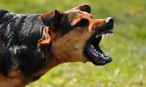 13χρονη σώθηκε από επίθεση παιδεραστή χάρη στο σκύλο της, στο πάρκο του Ιλισού - Τον
